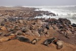 Cape Cross Seal Reserve